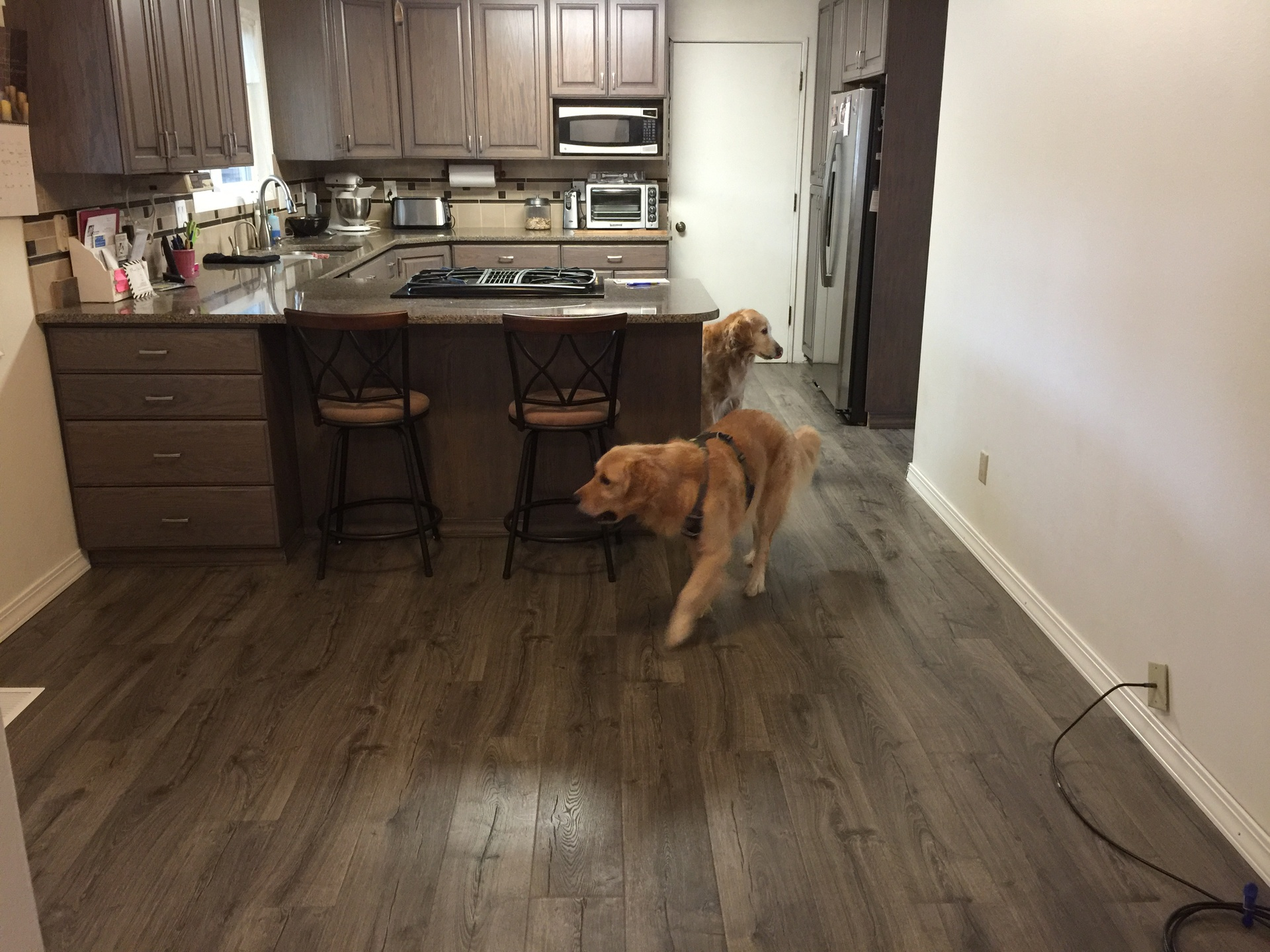 Top 28 Pergo Flooring Reviews Dogs Floor Pergo Floor